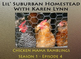 Karen Lynn discusses her Chickens today on the show