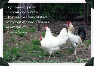 Essential Survival Show: Chickens_frame modern homesteading 2